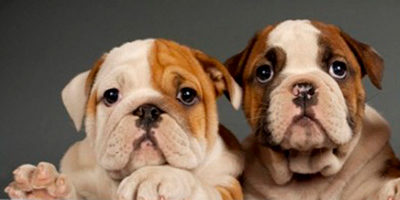 Собачьи идиомы